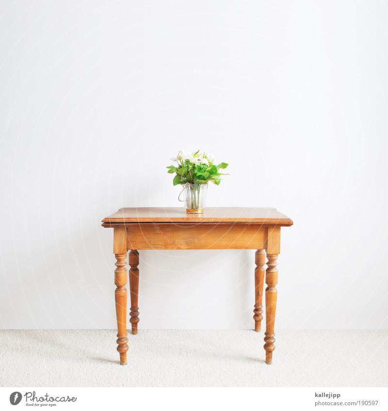 vierbeiner weiß Blume grün Pflanze Blatt Blüte Holz braun Raum Wohnung Design Tisch Lifestyle Freisteller Dekoration & Verzierung Häusliches Leben