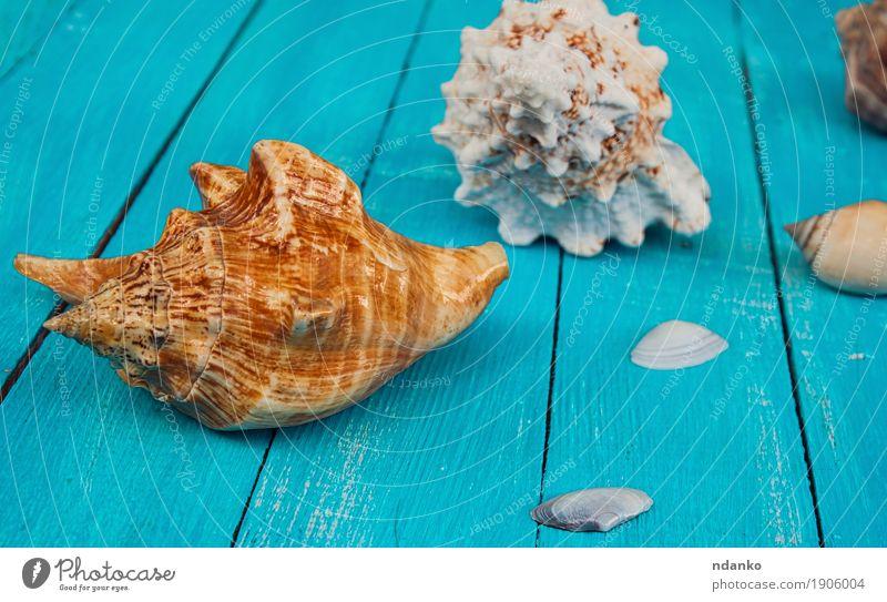 Muscheln auf einem blauen hölzernen Hintergrund schön Ferien & Urlaub & Reisen Sommer Meer Natur Holz natürlich tropisch Entwurf Schiffsplanken Panzer marin