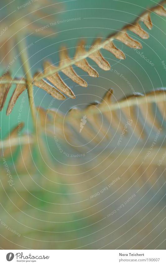 öffne deine Flügel ... Umwelt Natur Landschaft Pflanze Sommer Herbst Klima Sträucher Farn Blatt Grünpflanze Park weich blau grün Wahrheit Idylle innovativ