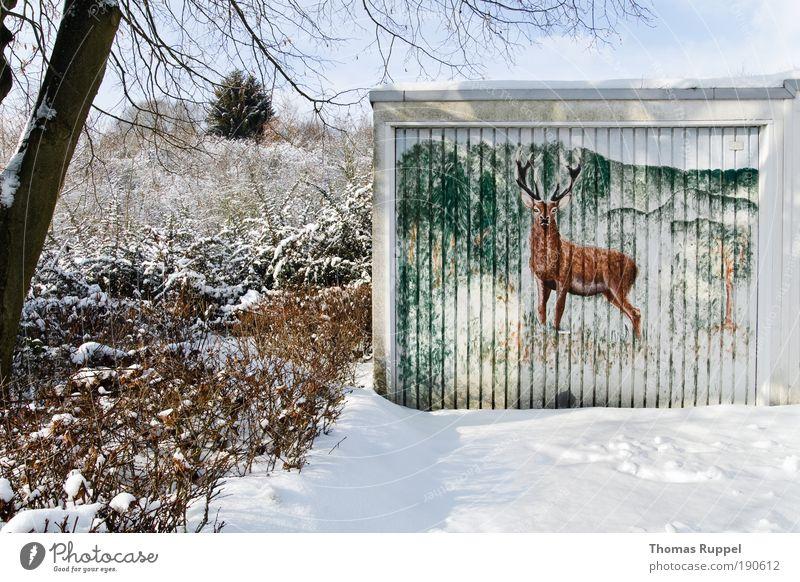 Hirsch Umwelt Natur Landschaft Winter Schönes Wetter Schnee Pflanze Baum Wald Stadtrand Menschenleer Gebäude Garage Tier Wildtier Hirsche 1 beobachten kalt