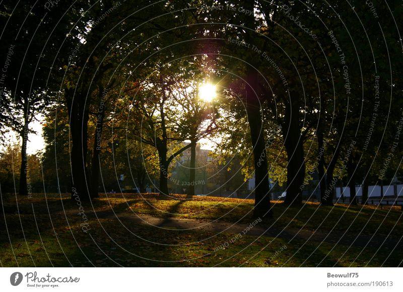 Ruhiger Nachmittag Umwelt Natur Pflanze Sommer Schönes Wetter Baum Sträucher Park Stimmung schön ruhig ästhetisch geheimnisvoll Gelassenheit Farbfoto