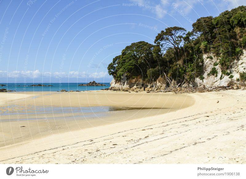 Strand in Neuseeland Umwelt Natur Sand Himmel Klima Schönes Wetter Küste Bucht Meer wandern Baum Ebbe Niedrigwasser Reisefotografie Insel Pause Erholung ruhig