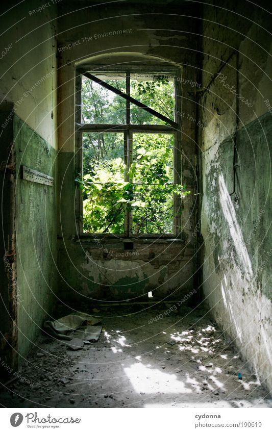 Ausblick ins Grüne Natur Baum Pflanze ruhig Wald Leben Wand Fenster Freiheit träumen Mauer Wege & Pfade Raum Umwelt Zeit ästhetisch