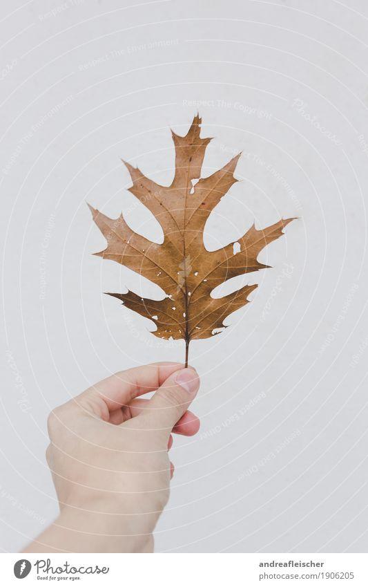 Ein Blatt im Wind Natur alt Pflanze weiß Hand Blatt Herbst braun hell träumen ästhetisch lernen Spitze berühren stoppen zeigen