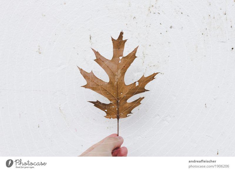 Blattgeschichten Erholung ruhig Ausflug Erntedankfest Leben 1 Mensch Umwelt Natur Pflanze Herbst Klimawandel Baum Grünpflanze wählen Spitze Loch getrocknet