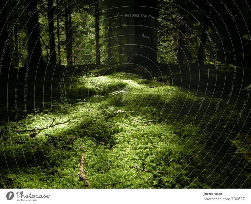 Bemoost - Ohne dies nix los Natur Landschaft Erde Sommer Pflanze Baum Gras Sträucher Moos Blatt Grünpflanze Wald ästhetisch frei frisch natürlich grün Gefühle