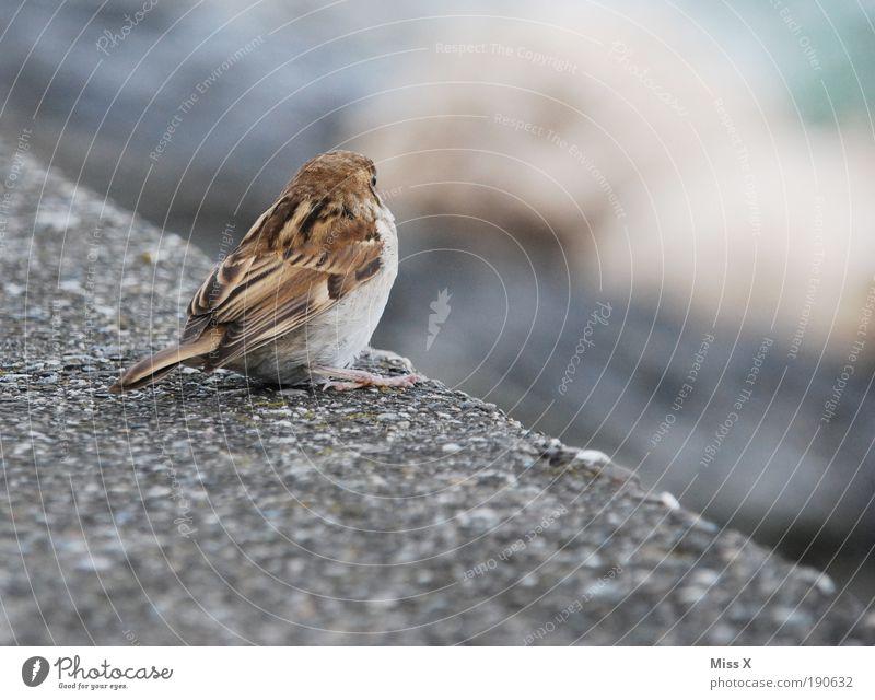 Spatz Einsamkeit Tier Wand Mauer Vogel klein kuschlig Gebäude Tierjunges