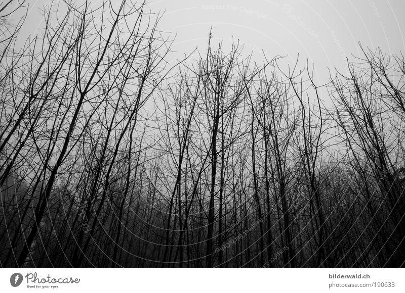 kühle Kühle kalt Angst Baum Winter grau Grauen Schwarzweißfoto Außenaufnahme Menschenleer Kontrast Silhouette Froschperspektive Tag