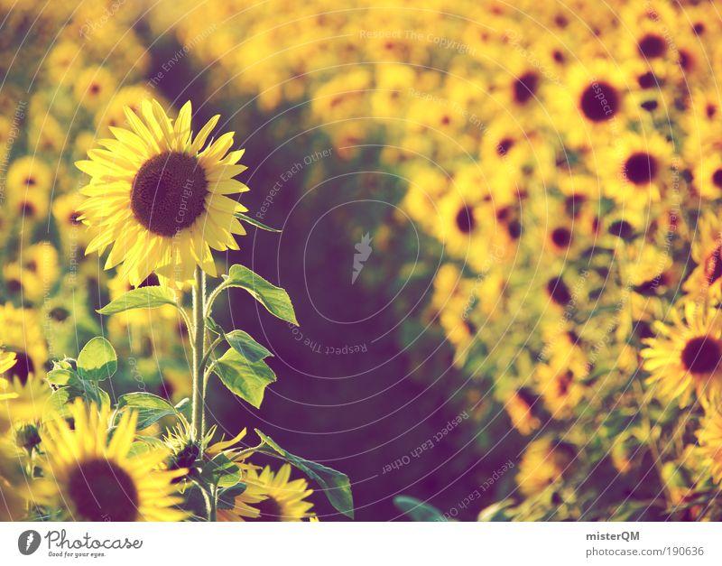 Field of Dreams. Natur Sommer gelb träumen Blume Landschaft Feld Umwelt ästhetisch Wachstum Romantik natürlich Landwirtschaft reif Jahreszeiten Ernte