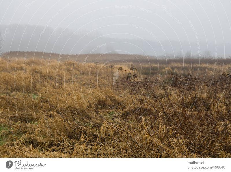 Bitte wärme mich Landschaft Herbst Klima schlechtes Wetter Nebel Regen Eis Frost Dürre Feld Seeufer kalt grau ruhig Traurigkeit Einsamkeit Verzweiflung