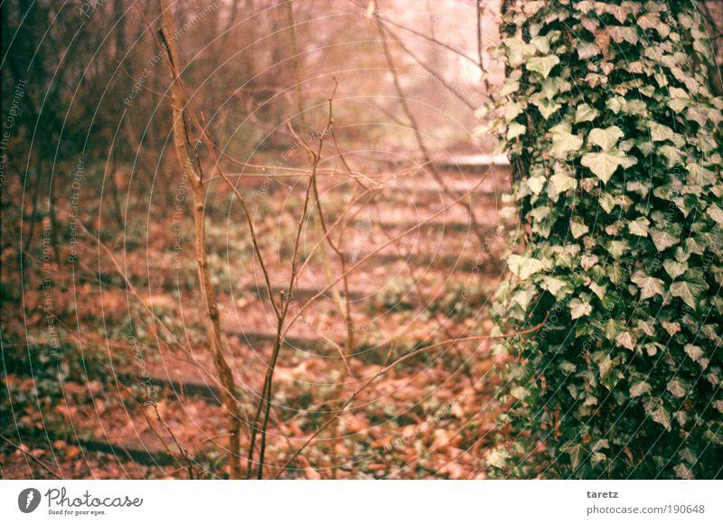 Herbst Natur alt grün Baum Pflanze rot Blatt ruhig Einsamkeit Wege & Pfade Park braun Nebel Treppe Vergänglichkeit