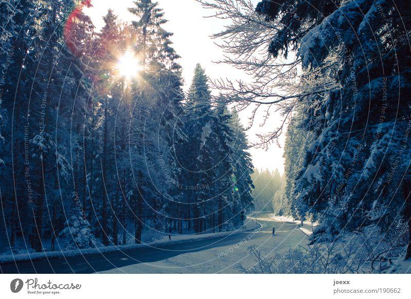 Weg frei Natur Himmel Winter Schnee Baum Wald Verkehrswege Straße Geschwindigkeit Sicherheit S-Kurve Schneelandschaft Nadelwald geräumt freie Fahrt Farbfoto