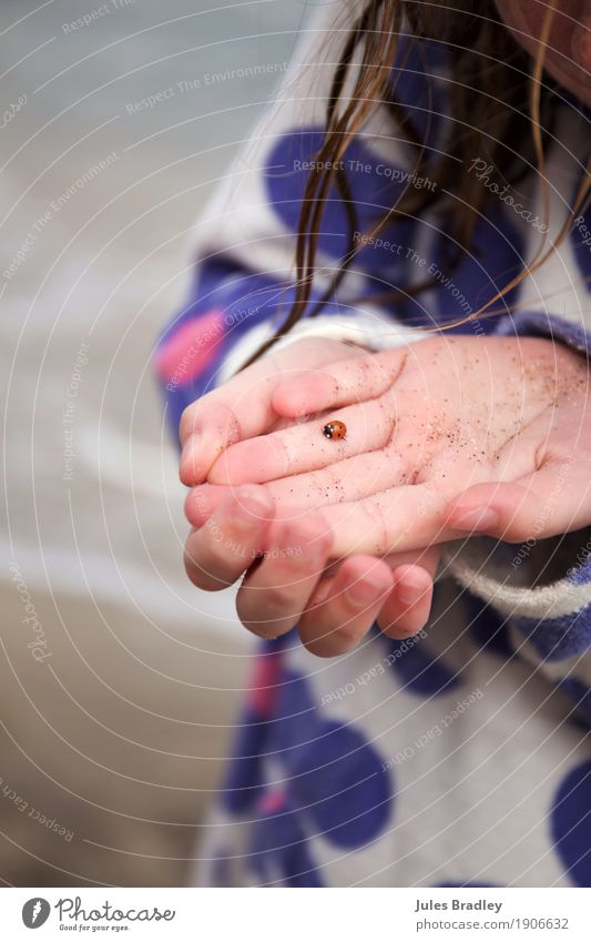 Ladybird on girl´s hand Mensch Kind Natur Ferien & Urlaub & Reisen Sommer Meer Hand rot Tier Mädchen Strand Umwelt natürlich Spielen klein Sand