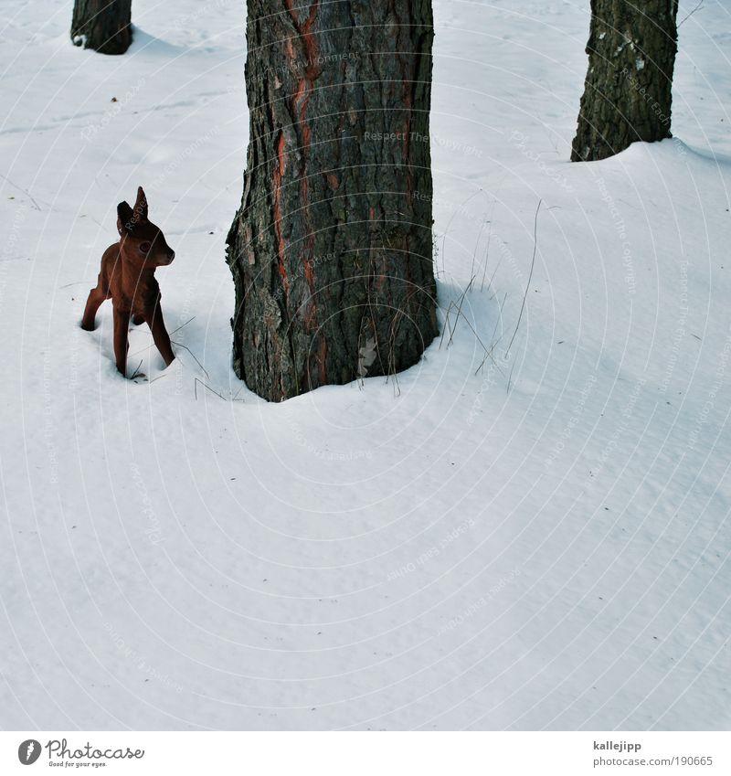 waidmanns dank Natur Baum Winter Tier Wald Umwelt Schnee klein Tierjunges Eis Angst Wildtier gefährlich Frost bedrohlich Idylle