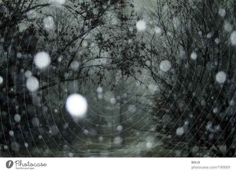 ARCHENLAND Umwelt Natur Landschaft Klima Klimawandel Wetter schlechtes Wetter Unwetter Park Wald glänzend Schneefall Schneelandschaft Schneesturm Schneeflocke