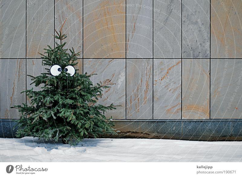 last christmas... Natur Weihnachten & Advent Baum Winter Umwelt Auge Schnee Leben Mauer Eis Feste & Feiern Klima Dekoration & Verzierung Frost Symbole & Metaphern Müll
