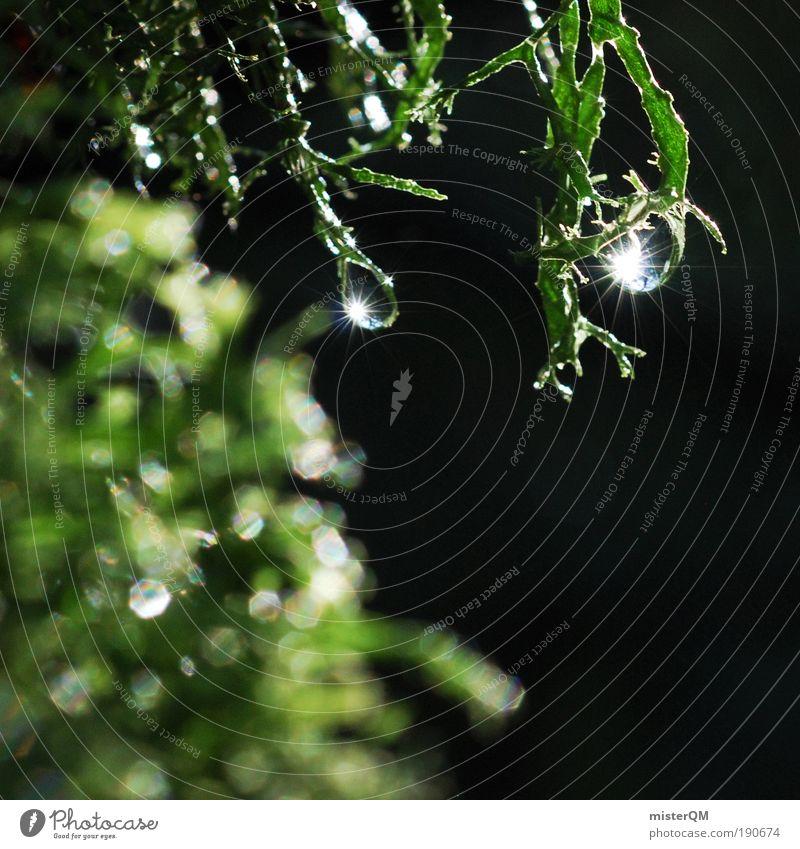 beautiful world. Natur Wasser schön Pflanze Einsamkeit Regen Landschaft glänzend Umwelt Wassertropfen Erde ästhetisch Tropfen Frieden Klima einzigartig