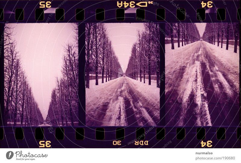 3in1 Allee Natur schön Baum Erholung kalt Umwelt Bewegung Garten Wege & Pfade Traurigkeit Park Kunst Horizont Angst wandern ästhetisch