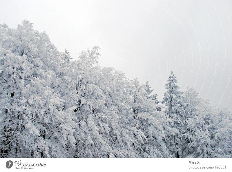 Waldstein Natur weiß Baum Ferien & Urlaub & Reisen Winter kalt Schnee Berge u. Gebirge grau Eis Ausflug groß Frost Tanne Schönes Wetter