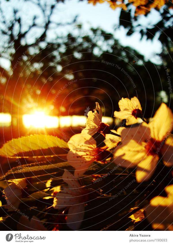 Beginning of Spring Himmel Natur schön Baum Freude Blatt Wärme Glück Blüte hell Park Zusammensein Sonnenuntergang natürlich ästhetisch Wachstum