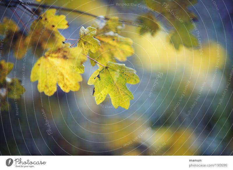Altern in Schönheit schön harmonisch Wohlgefühl Zufriedenheit Erholung ruhig Gartenarbeit Natur Herbst Baum Blatt Herbstlaub herbstlich Herbstwald Herbstbeginn