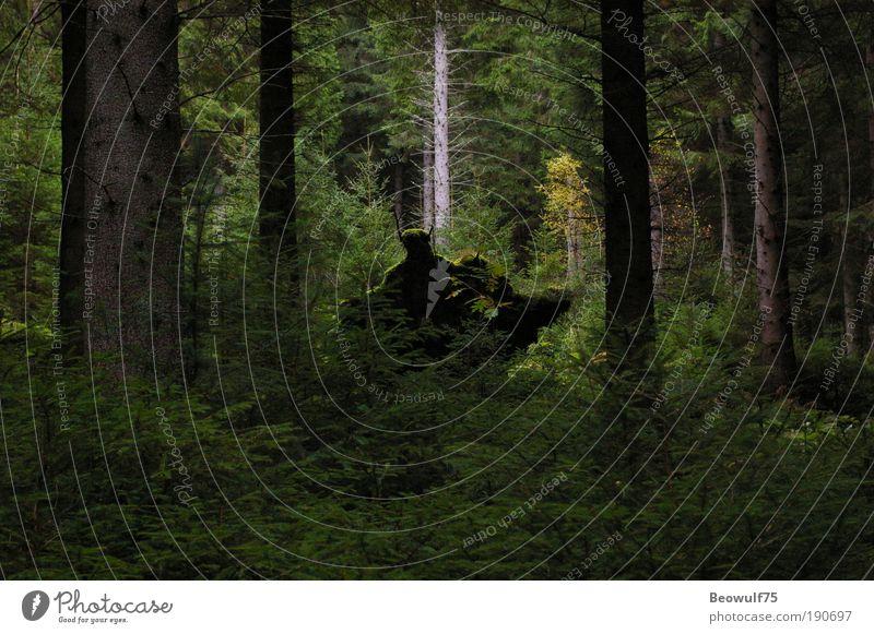 Natur Baum Pflanze Wald Herbst Gefühle Umwelt Sträucher geheimnisvoll Neugier Moos Surrealismus Sinnesorgane Überraschung Farn verstört