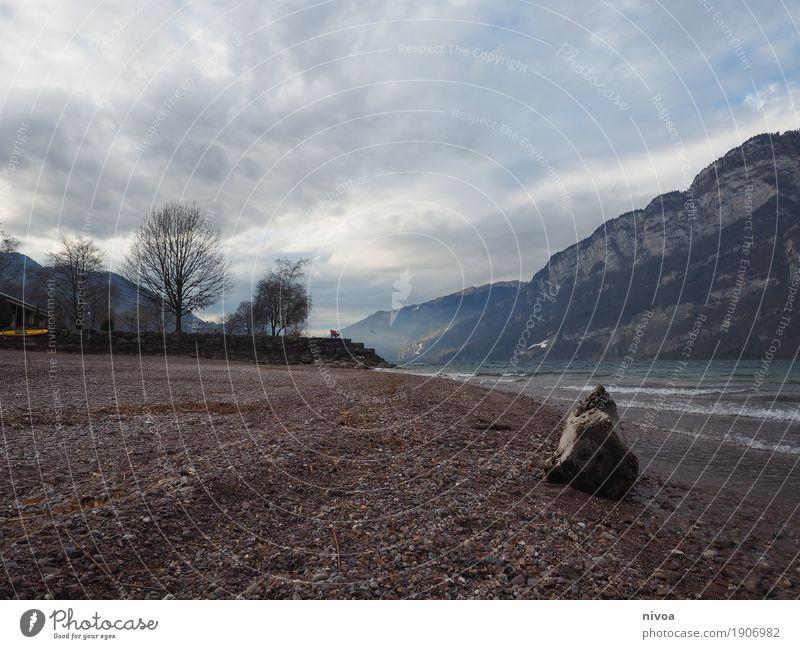 neulich am walensee Umwelt Natur Landschaft Pflanze Tier Urelemente Erde Wasser Himmel Wolken Sonnenlicht Winter Klima Wind Nebel Baum Felsen Alpen