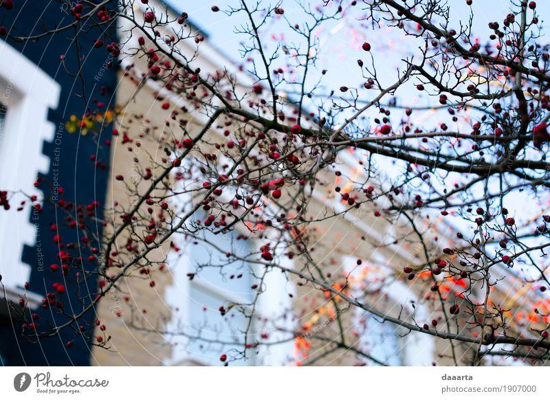 Winter in London Lifestyle Stil exotisch Freude Leben harmonisch Freizeit & Hobby Ferien & Urlaub & Reisen Tourismus Abenteuer Freiheit Sightseeing