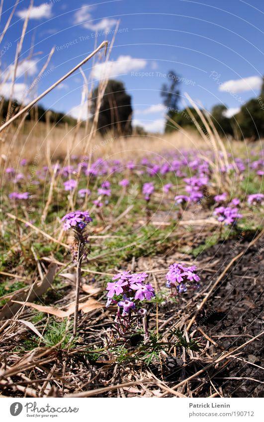 was wächst denn da am Strassenrand Natur Himmel blau Pflanze Sommer Frühling Landschaft Umwelt Erde fahren Hügel Schönes Wetter Australien Grünpflanze