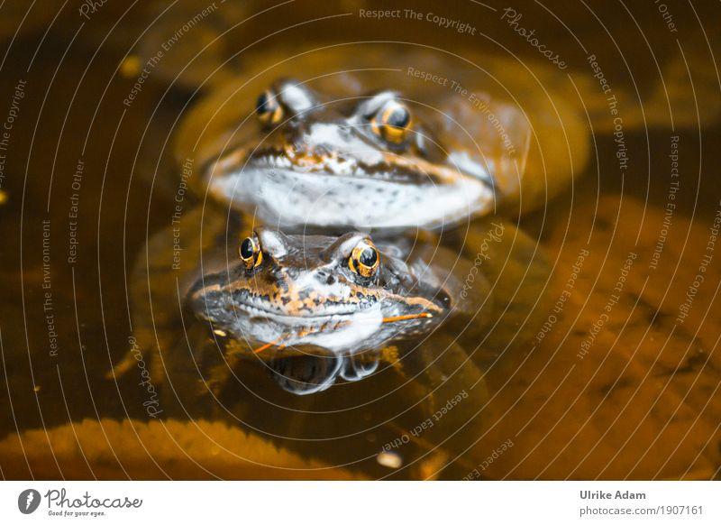 Kröten im Teich Natur Sommer Wasser Tier Auge Frühling natürlich Schwimmen & Baden braun Tierpaar Wildtier Sex Seeufer Tiergesicht Frosch