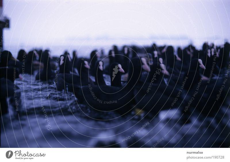 Entenwuhling Kunst Natur Landschaft Pflanze Tier Urelemente Wasser Wassertropfen Winter Klima Eis Frost Küste Flussufer Wildtier Vogel Tiergesicht Flügel