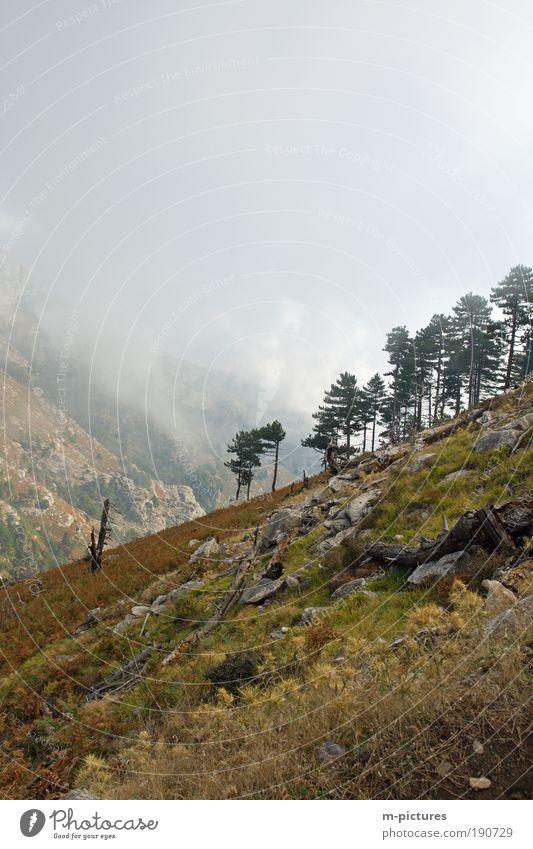 Wandern auf Thassos Ferien & Urlaub & Reisen Ausflug Sommerurlaub Berge u. Gebirge Natur Landschaft Pflanze Himmel Wolken Schönes Wetter Tourismus Ziel