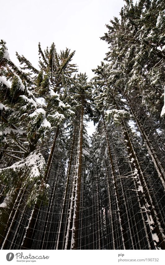 peak search Natur Baum Winter schwarz Wald Umwelt dunkel kalt Schnee grau hell Eis Angst hoch groß Frost