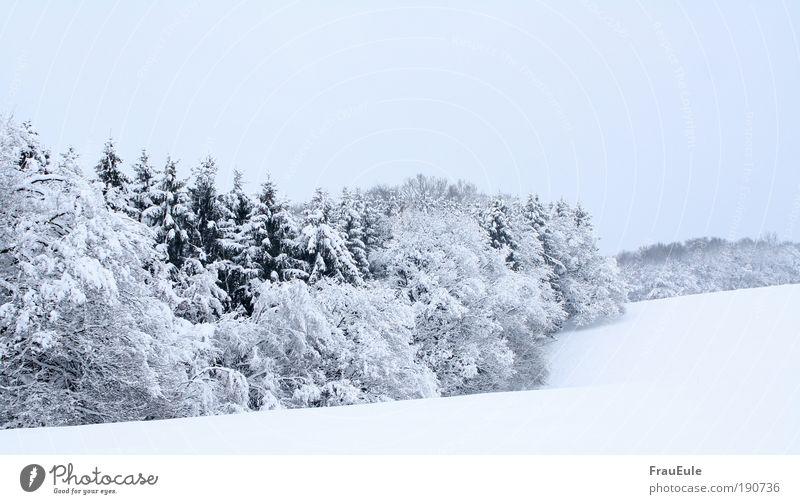 Wintertraum Natur Landschaft Eis Frost Schnee Baum Feld Wald Hügel frisch glänzend kalt natürlich blau Farbfoto Außenaufnahme Textfreiraum unten Tag Sonnenlicht