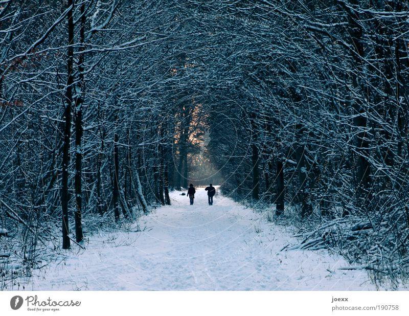 Verbeugung Mann Natur Winter Erwachsene Wald kalt Schnee Leben Paar Eis Zusammensein gehen laufen Ausflug Frost Spaziergang