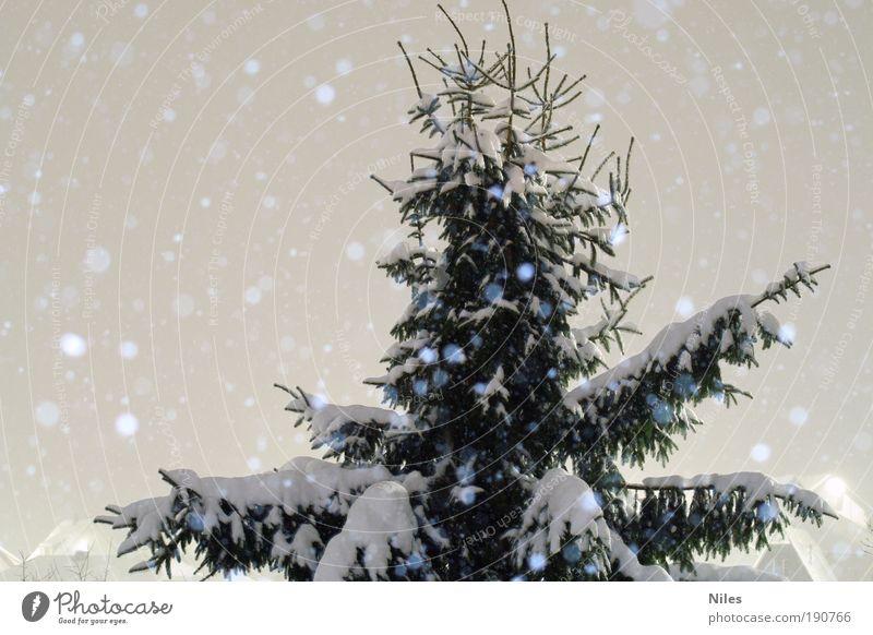 Fichtenschnee bei Nacht Umwelt Natur Erde Nachthimmel Winter Klima Wetter Schönes Wetter Eis Frost Schnee Schneefall Baum Park natürlich Spitze grün weiß Tanne
