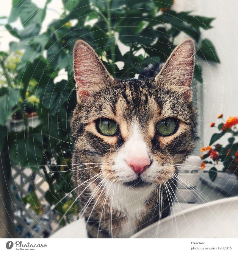 Hello, nice to meowt you Balkon Terrasse Tier Haustier Katze 1 Neugier grün Interesse entdecken Farbfoto Außenaufnahme Nahaufnahme Unschärfe Porträt Blick