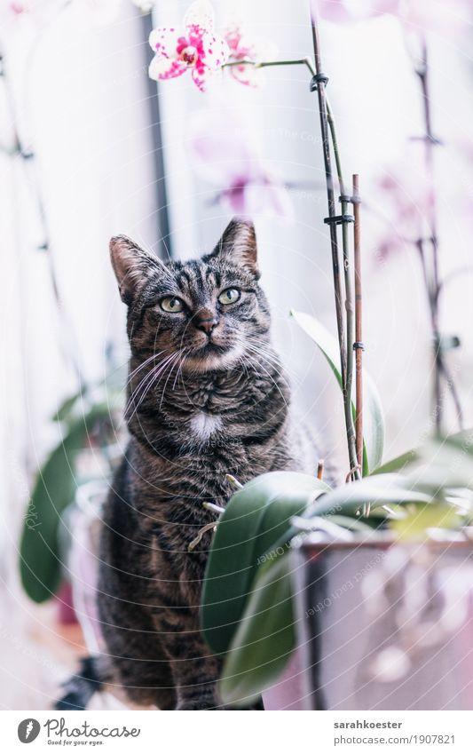 Katze zwischen Blumen Natur Pflanze Tier Haustier 1 sitzen ästhetisch authentisch elegant Freundlichkeit Fröhlichkeit nah natürlich feminin weich rosa