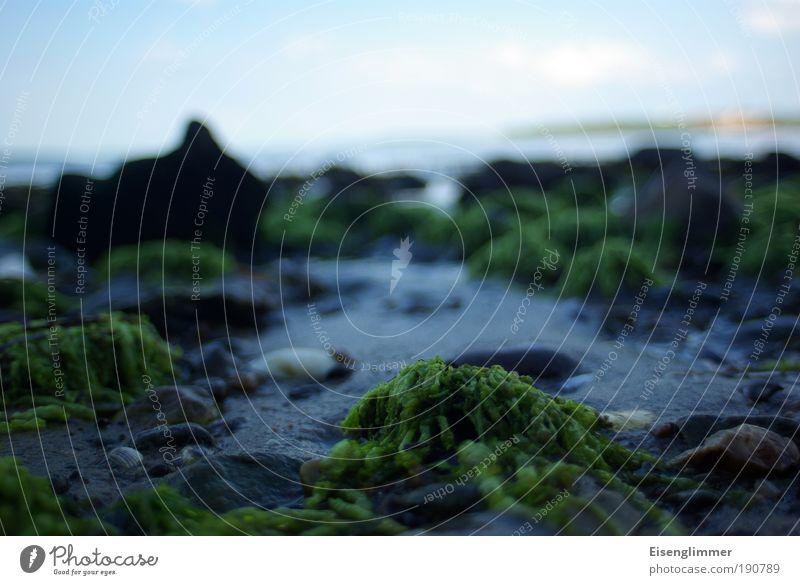 Kein schöner Strand Himmel Natur Wasser Pflanze Sommer Wolken Einsamkeit Ferne Leben Landschaft Umwelt Sand Stein Küste Horizont