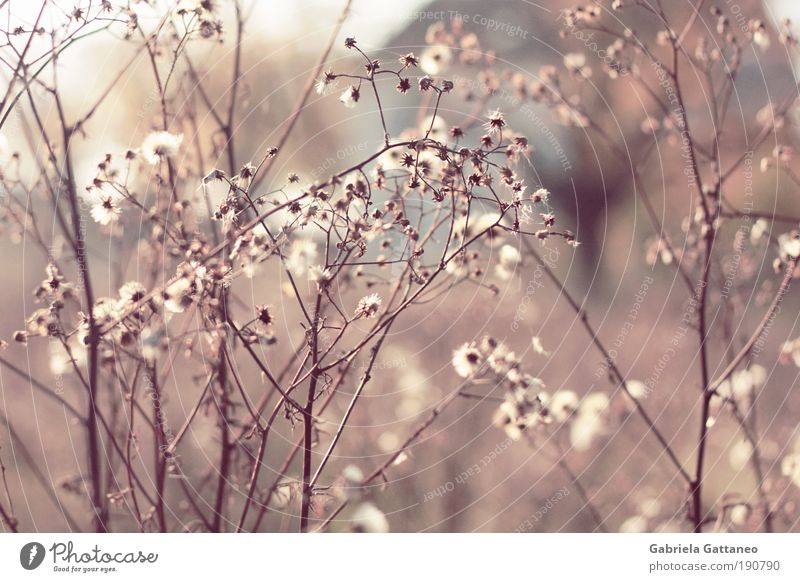Lämpchen Natur Pflanze blau schön Herbst braun Wachstum leuchten Sträucher violett Vernetzung