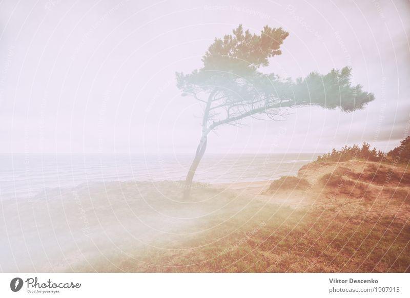 Meer Morgen Herbst schön Ferien & Urlaub & Reisen Sommer Sonne Strand Winter Natur Landschaft Himmel Nebel Baum Wald Ostsee hell natürlich blau grün weiß Farbe