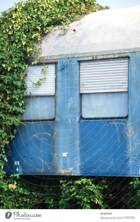 Zugverspätung Natur alt grün blau Pflanze Verkehr Eisenbahn Personenverkehr Efeu Verkehrsmittel Umwelt Bahnfahren Personenzug Verspätung