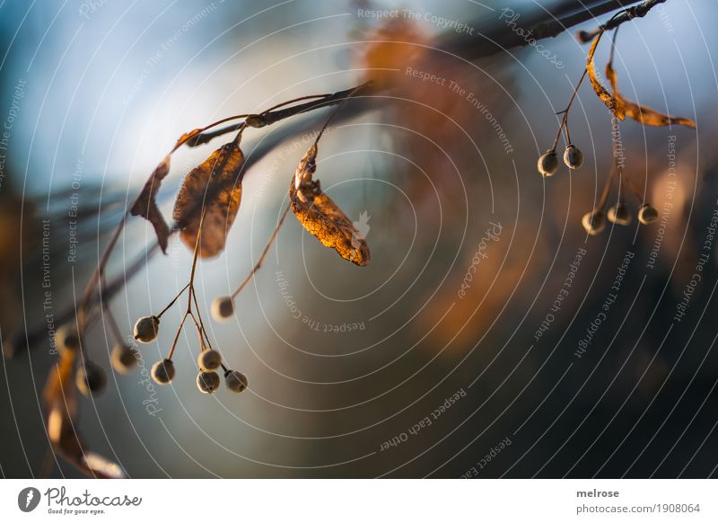 Berries and light elegant Stil Umwelt Natur Himmel Sonne Winter Klima Schönes Wetter Pflanze Sträucher Blatt Blüte Wildpflanze Wald Gegenlicht Winterleuchten