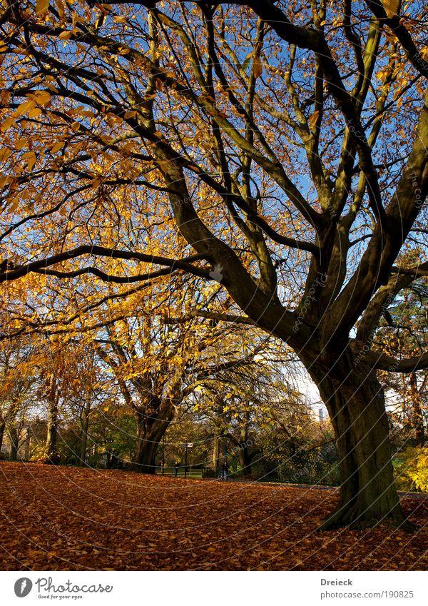 bunt getrieben Natur schön Baum Sonne blau Pflanze Blatt gelb Farbe Wald Erholung Herbst Park Landschaft hell Stimmung