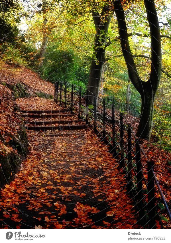 Laubbaumpark Umwelt Natur Landschaft Pflanze Erde Sonnenlicht Herbst Klima Wetter Schönes Wetter Baum Sträucher Blatt Grünpflanze Park Wiese Wald braun