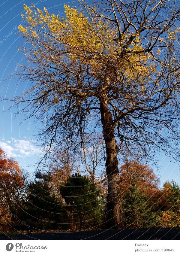 Tausendaestler Himmel Natur blau grün Baum Pflanze rot Blatt Wald gelb Herbst Wiese Umwelt Landschaft Holz Gras