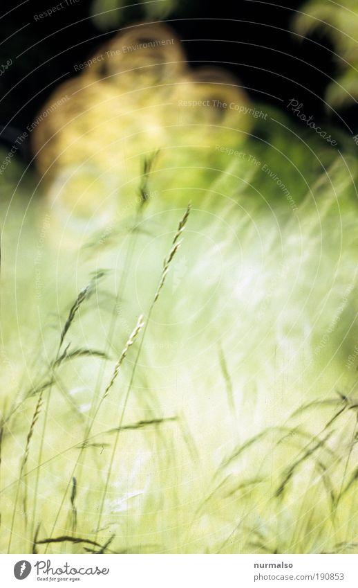 ich mach ma Sommer Natur schön Pflanze Sommer Freude Landschaft Gefühle Gras Glück Wärme lachen hell Kunst glänzend Klima Dekoration & Verzierung