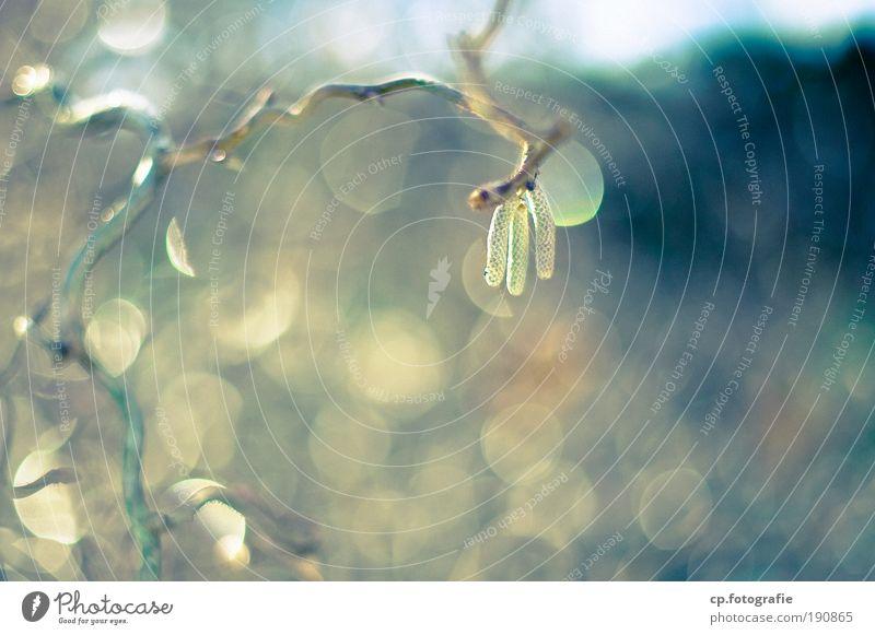 nach dem Regen Natur Pflanze Sonne Winter natürlich frisch Sträucher Wassertropfen genießen nass Hoffnung Grünpflanze Birke