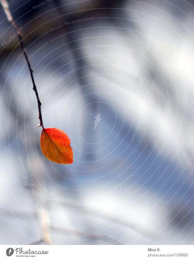 Ein Meer an Blättern Natur rot Pflanze Blatt Einsamkeit Winter Herbst klein Park Sträucher trist Ast Schwache Tiefenschärfe
