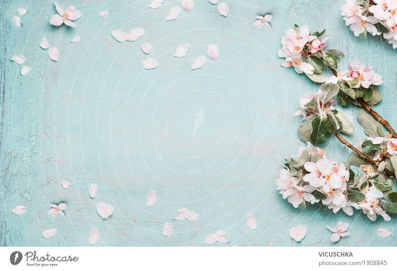 Frühjahr Hintergrund mit schönen Frühlingsblüten Stil Design Feste & Feiern Muttertag Ostern Natur Pflanze Blatt Blüte Garten Blühend Liebe rosa Duft rein